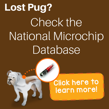 lost pug microchip search